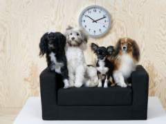 Muebles para mascotas de Ikea