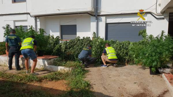 Plantación de marihuana en la masía de Vistabella