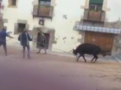 Una vaquilla llora de dolor al intentar huir de un festejo en Cuenca