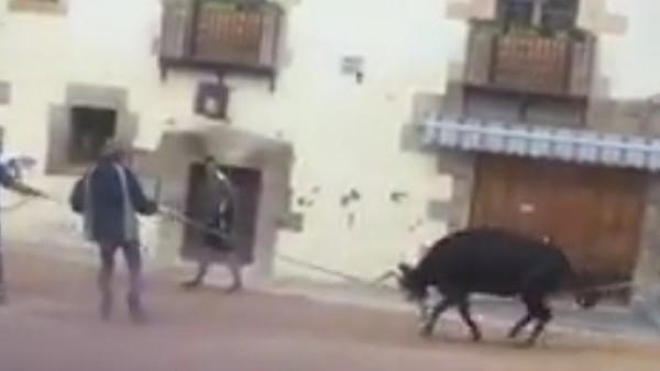 Una vaquilla atada a una cuerda intenta escapar y grita de dolor.