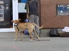 Mendigar con perros puede llegar a reportar a las mafias hasta 400 euros diarios