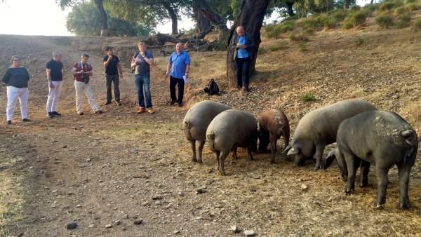Periodistas alemanes realizan un viaje de prensa a Huelva