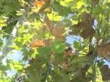 El otoño arranca este domingo con más calor de lo normal