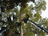 Trabajos en el Parque María Luisa de Sevilla