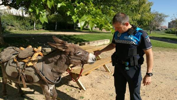Un agente de la Policía Municipal junto al burro