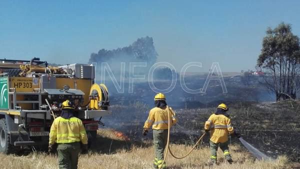 El Infoca interviene en un incendio agrícola en Almonte.