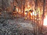 Efectivos del Infoca intervienen en un incendio en Almonte.