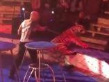 Una tigresa sufre un ataque mientras actúa en el circo