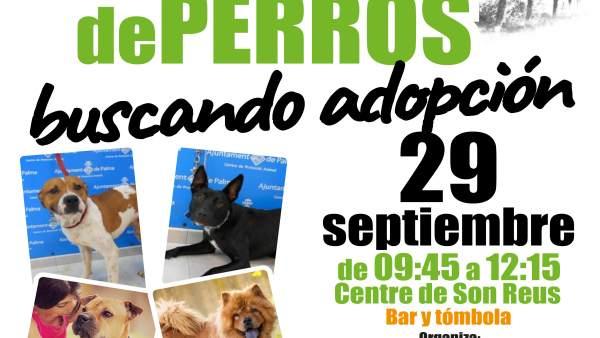 Cartel desfile de perros buscando adopción