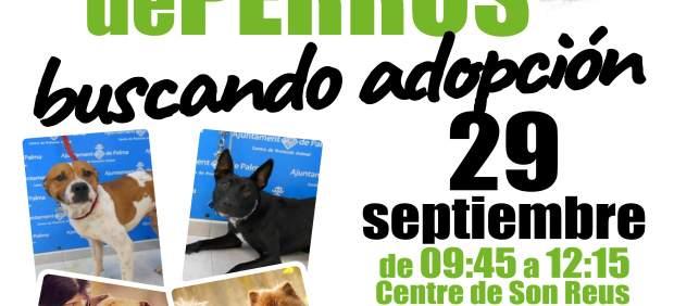 La asociación Peluditos de Son Reus organiza un desfile de perros para el próximo sábado