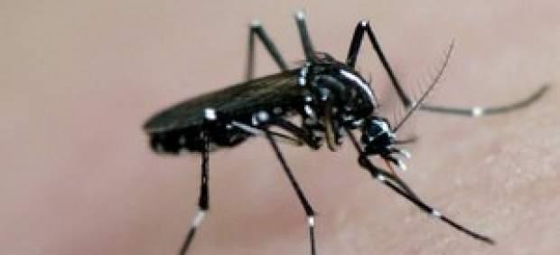 Sanidad confirma el tercer caso de dengue contraído en España, el de un hombre residente en Madrid