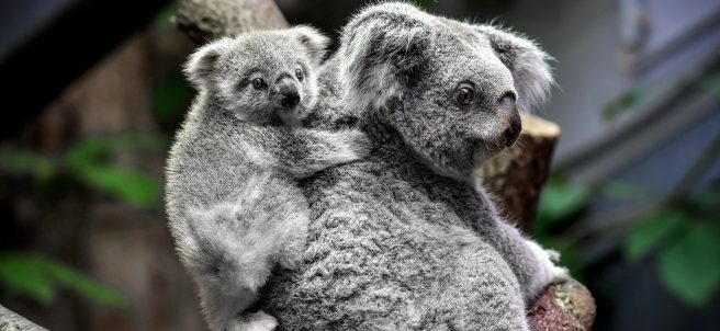 Al abrigo de mamá