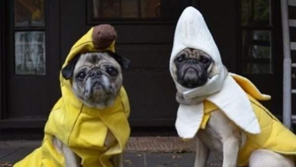 Perros disfrazados