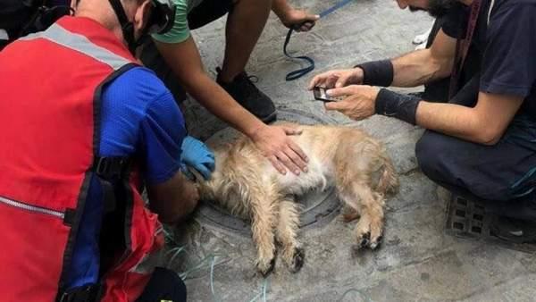 Reanimación de un perro