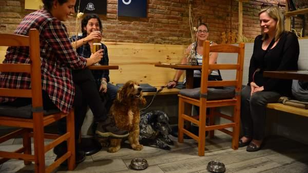 Bar de perros de Barcelona