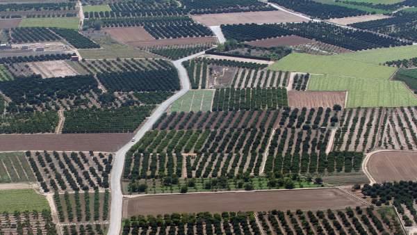 Campos, huertas, minifundios, huertos, agricultura, árboles, explotación agraria