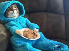 EE UU se disculpa por enviar una invitación con un gato en pijama