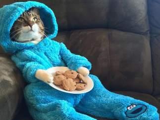 Gatito en pijama