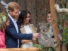 Bautizan a dos bebés koalas en honor a Meghan Markle y el príncipe Harry