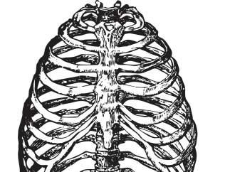 Los humanos pueden tener una costilla extra