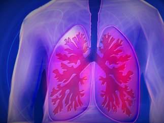 El pulmón derecho es más grande que el izquierdo