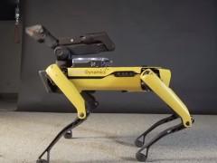 Este es el perro robot bailarín: no hay ritmo que se le resista