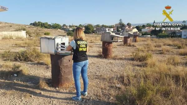 Desarticulado un grupo especializado en secuestrar palomos