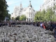 Horario y recorrido del rebaño de ovejas por la Fiesta de la Trashumancia en Madrid