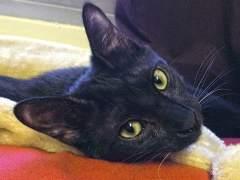 Juicio a un militar por la muerte de Negrito, el gato de un soldado: admite que le disparó pero no le dio