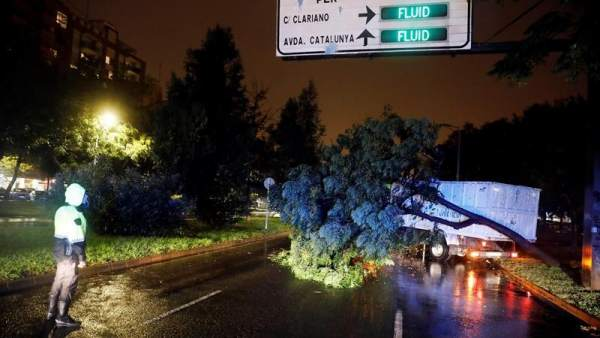 Árbol caído por el temporal en Valencia