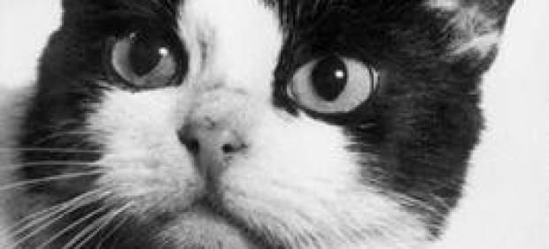 Félicette, el primer y único gato que ha sobrevivido en el espacio