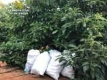 La Guardia Civil evita el robo de 600 kilos de aguacates en Lepe.