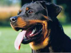 Un policía mata de un disparo a un perro que lo atacó azuzado por unos narcotraficantes en Madrid