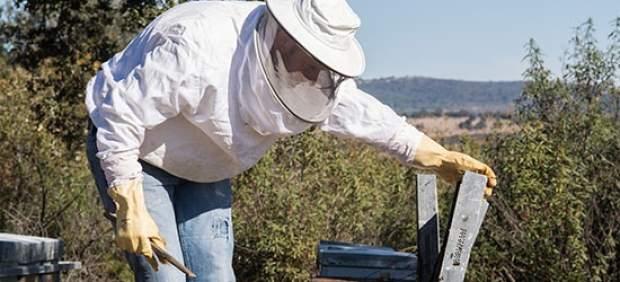 Consejos para actuar en caso de sufrir una picadura de abeja