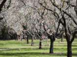 Árboles en el Retiro