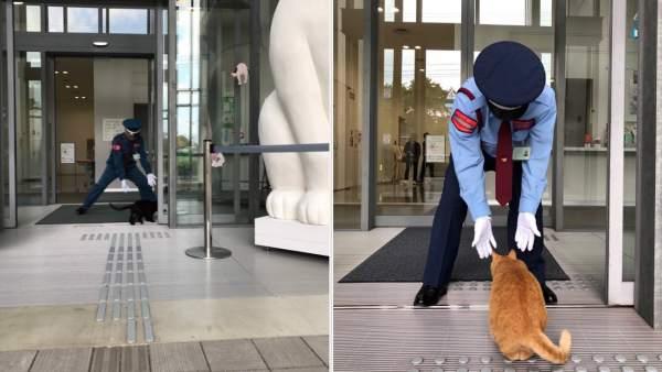 Gatos en Japón