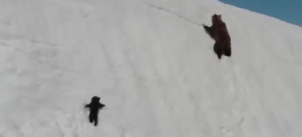 Vídeo del oso y su mamá.