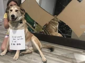 El perro de esta familia imagina una puerta
