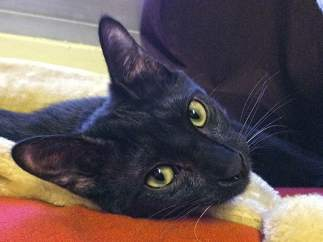 Negrito, el gato asesinado por un militar