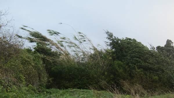 Fuertes rachas de viento