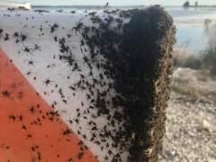 Miles de arañas