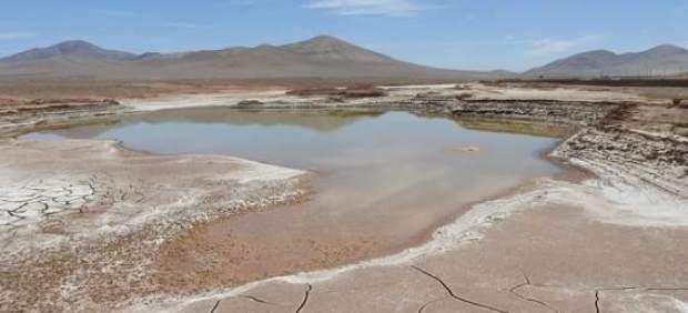 La lluvia llega al desierto de Atacama por primera vez en 500 años y provoca una extinción masiva ...