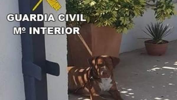Imagen del perro abandonado