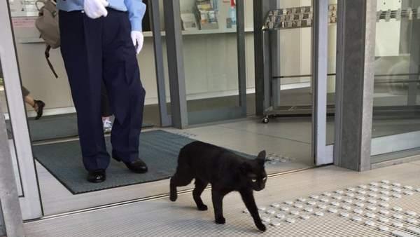 Unos gatos llevan 2 años intentando entrar en un museo