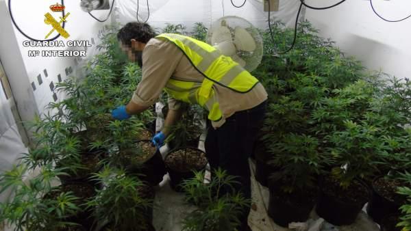 La Guardia Civil desmantela un invernadero de marihuana en un dúplex