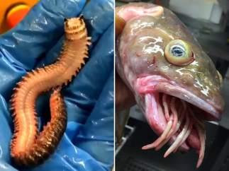 Peces del mar profundo