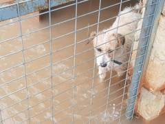 Inundaciones en una protectora de animales de Valencia