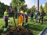 Plantación de árboles en Sevilla