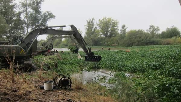 Maquinaria de la UME recoge camalote en el río Guadiana