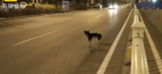Un perro espera en una carretera a su dueña fallecida